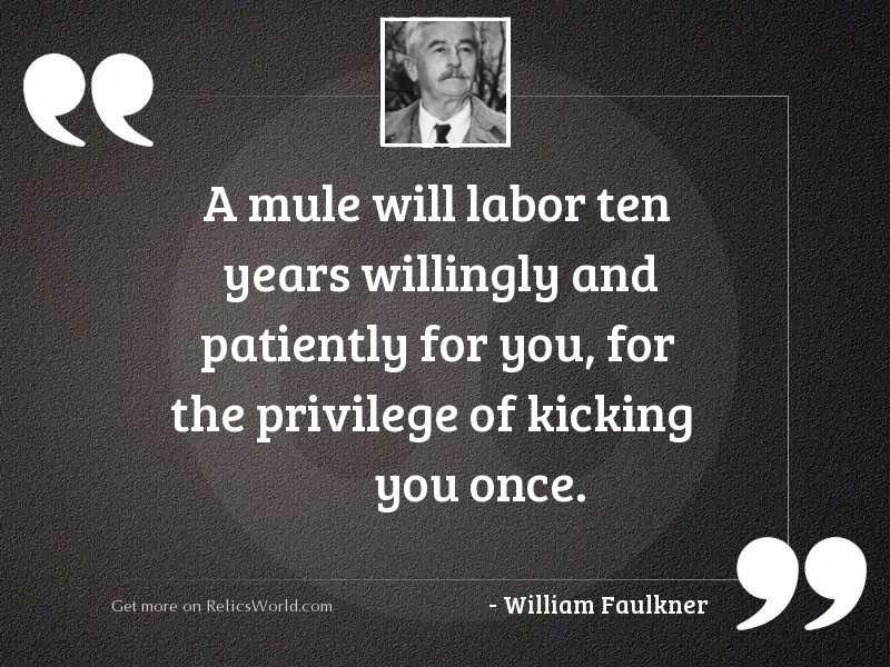 A mule will labor ten