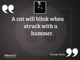A cat will blink when